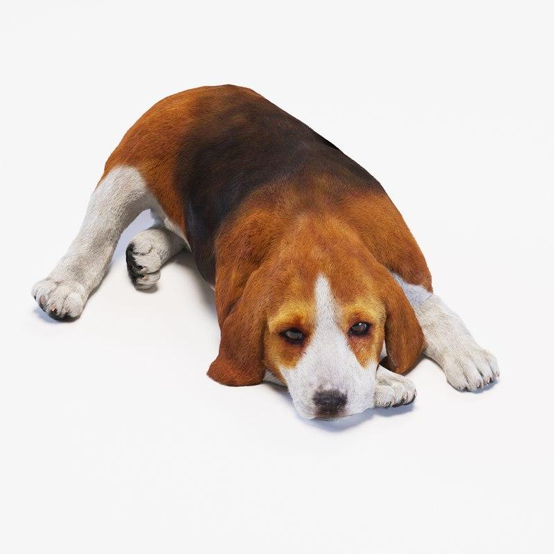 3d puppy beagle model