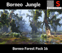 Borneo Forest  HD