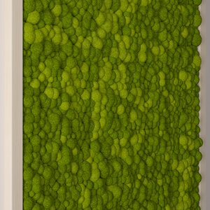 seamless moss max