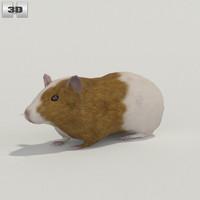 guinea pig 3d max
