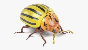 leptinotarsa potato beetle 3ds