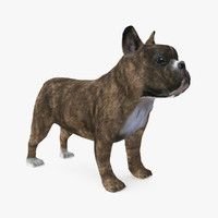 fur french bulldog 3d max