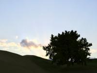 Oak Tree LOW POLY