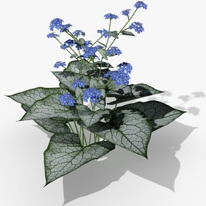 3d brunnera flowering jack frost model