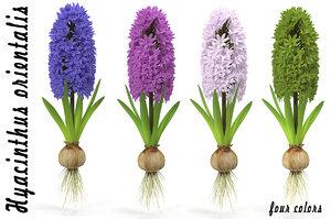 3d hyacinthus orientali plant model