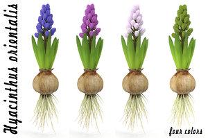 3d model hyacinthus orientali plant