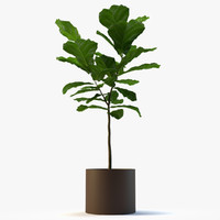 fig plant 3d model
