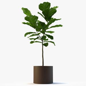 fig plant 3d model