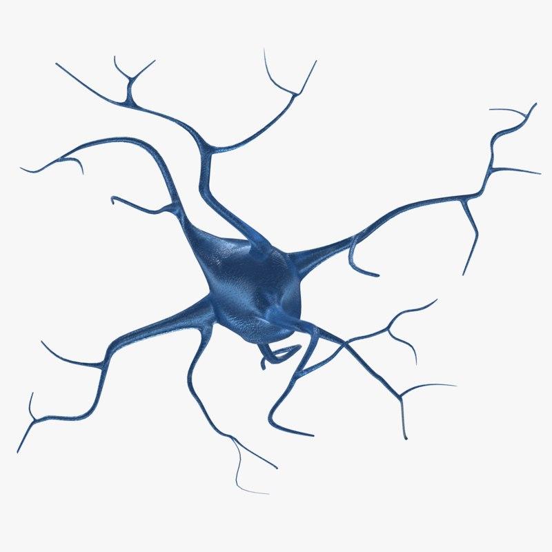 neuron cells 3d model