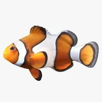 clownfish scanline 3d obj
