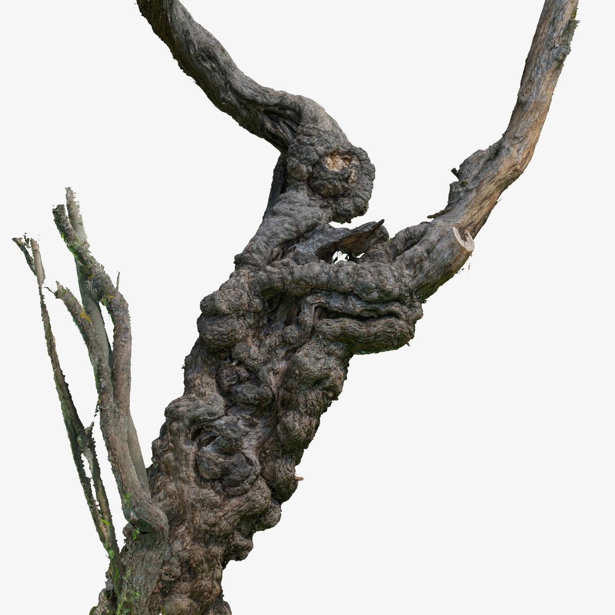 3d scanned trunk tree raw model