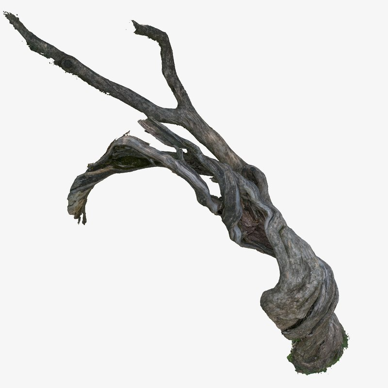 twisted cracked tree trunk 3d model
