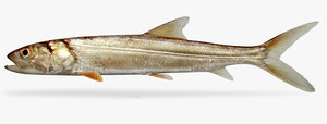 3d ma ladyfish fish