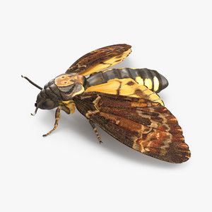 deaths head hawkmoth 3d x