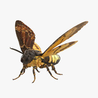 max deaths head hawkmoth rigged