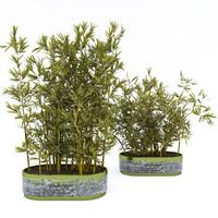 Plants in pots3