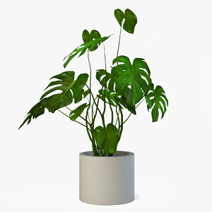 3d plant monestra