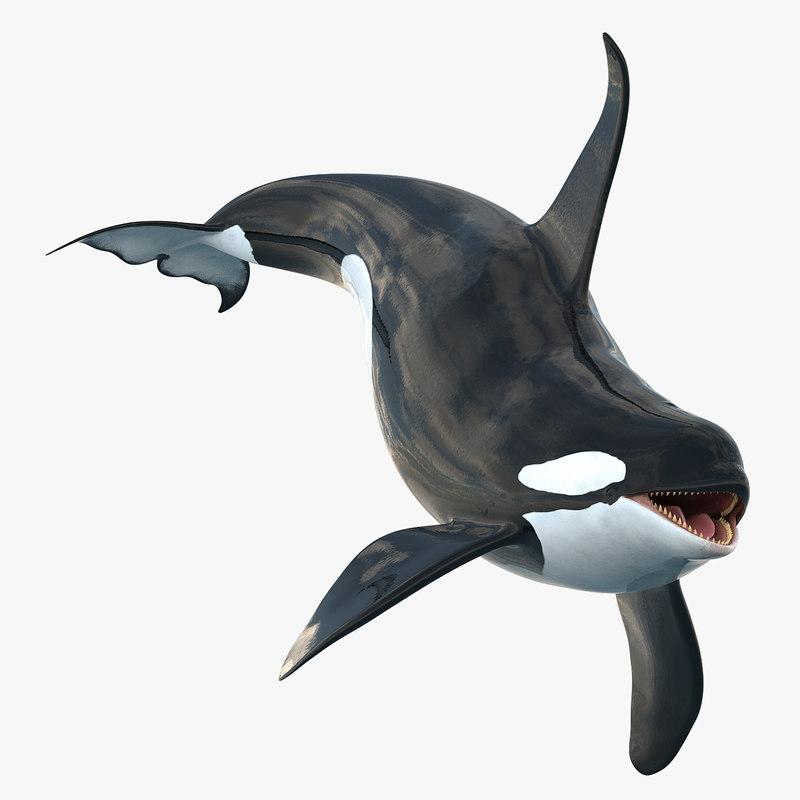 killer whale rigged 3d model