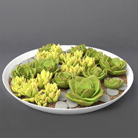 Succulents Set # 2