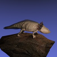 3ds axolotl ambystoma mexicanum