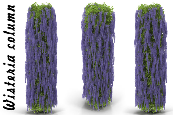 3d model of wisteria column flowering