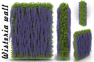 3d model wisteria wall flowering