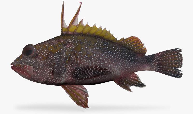 3d spotback scorpionfish model