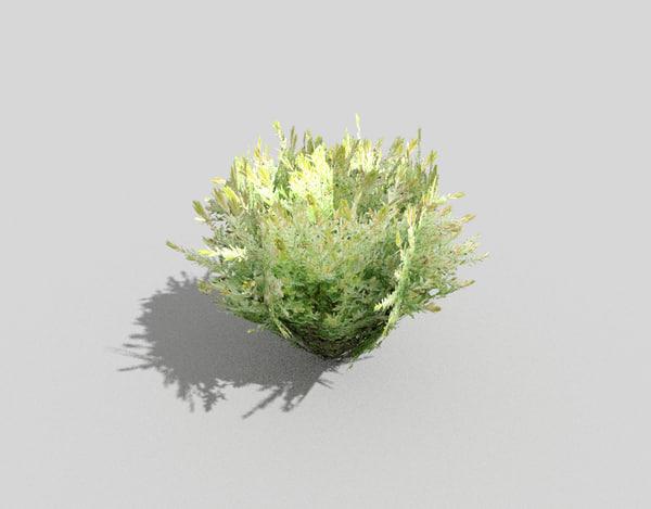 tropical shrub 3d 3ds