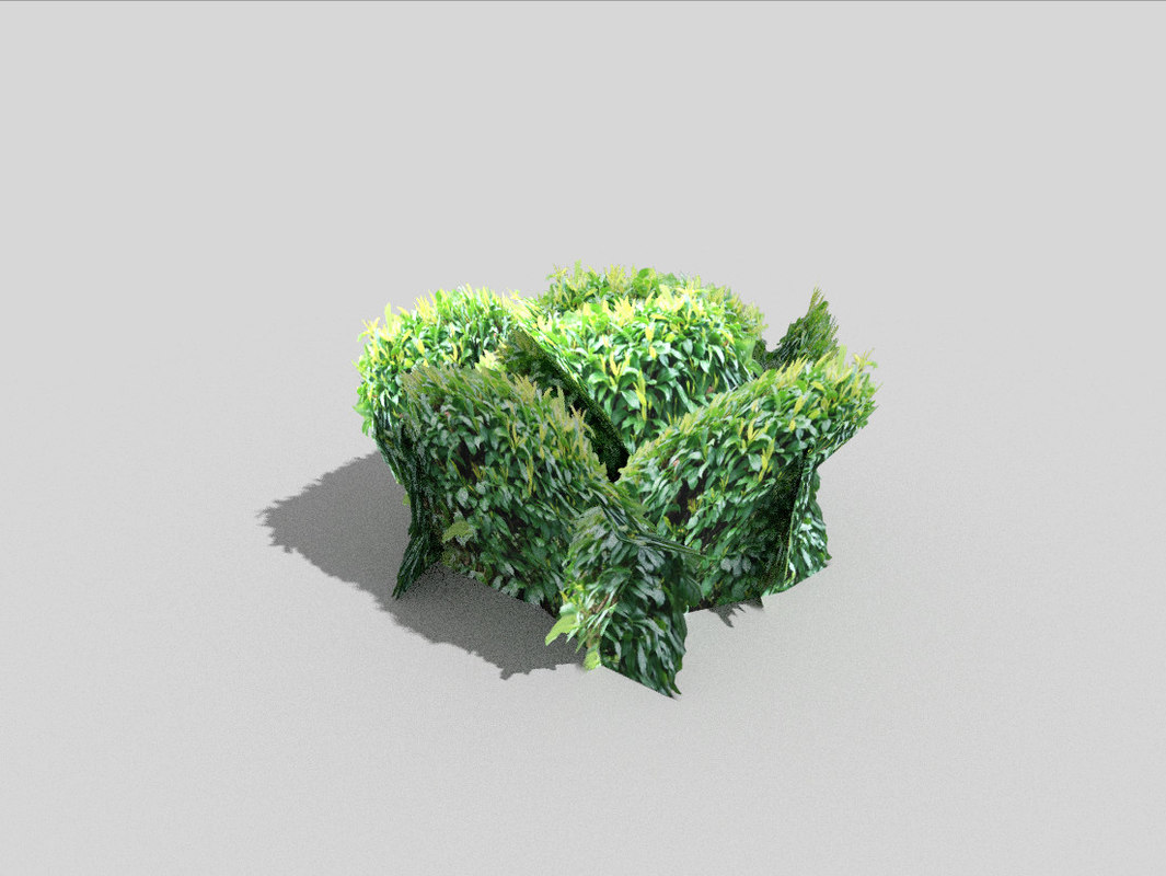 tropical shrub 3d model