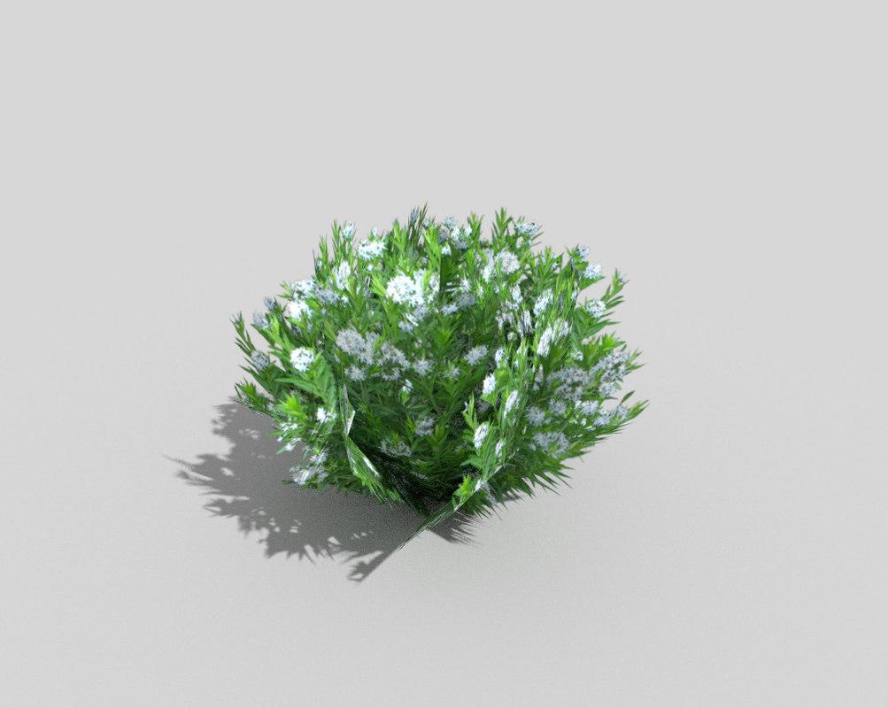 tropical shrub 3d model