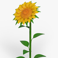 cartoon sunflower flower 3d max