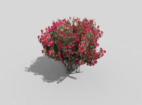 tropical shrub