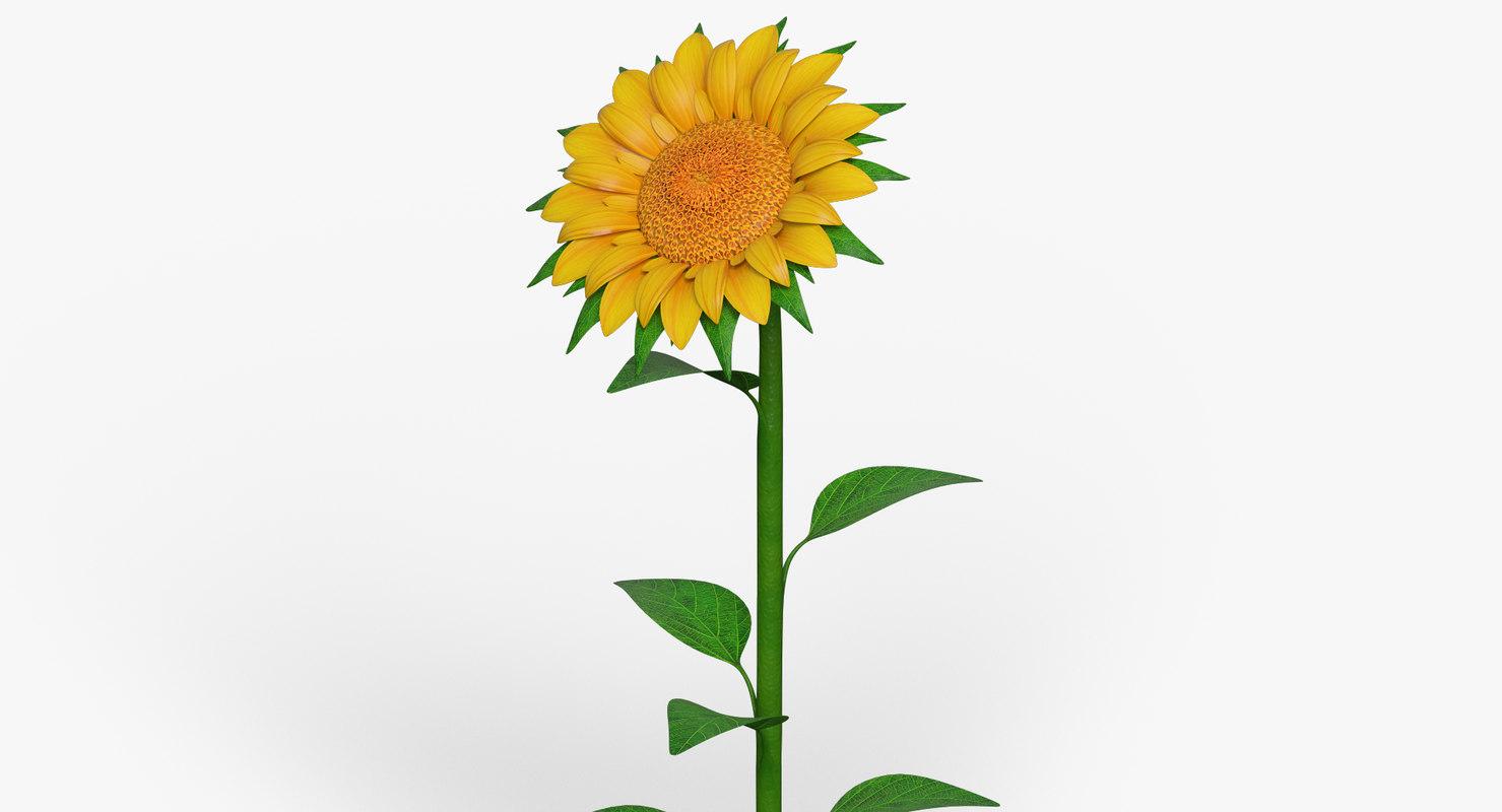 cartoon sunflower flower 3d max