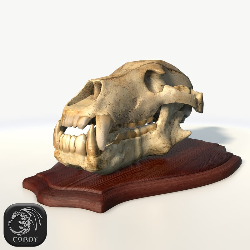 3d bear skull advanced