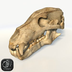 3d bear skull model