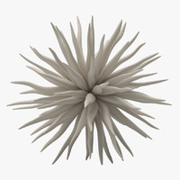 free max model decoration 08 sea urchin