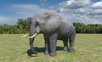 African Elephant Low Poly