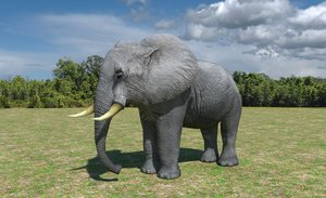african elephant 3d max