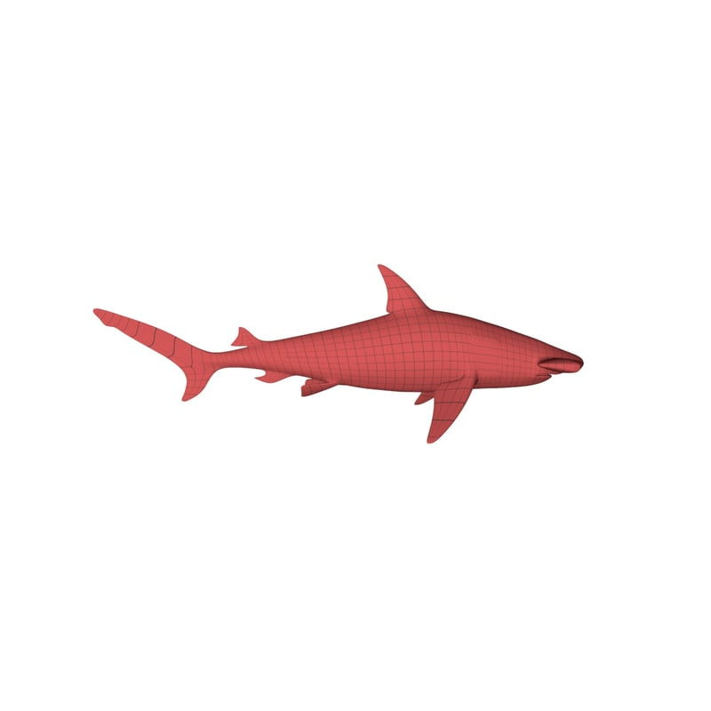 3d model base mesh hammerhead shark