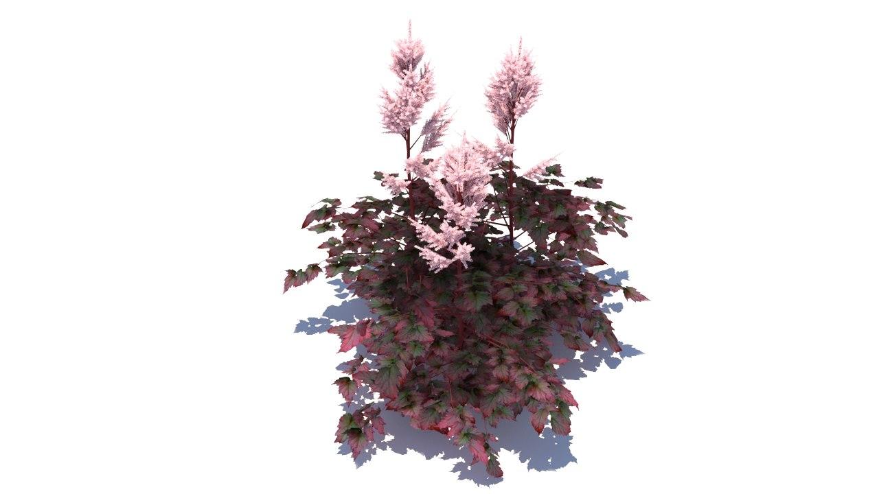 3d model astilbe chinensis color flash