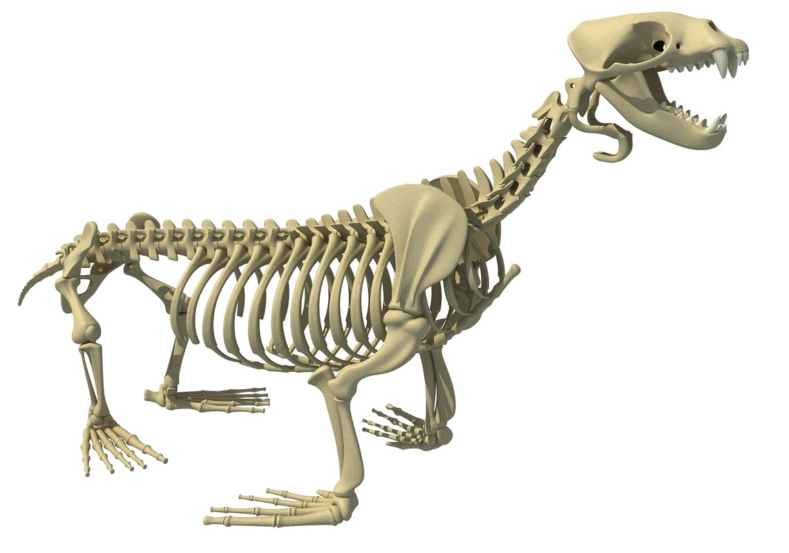 obj sea lion skeleton animal
