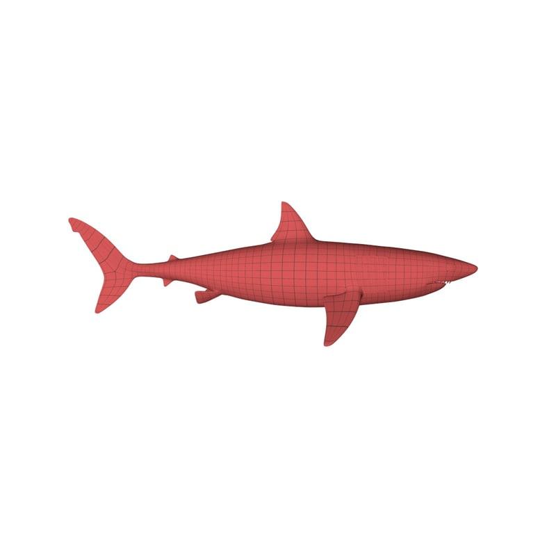 3d base mesh shark model