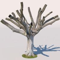 Tree 07 (3D Scan)