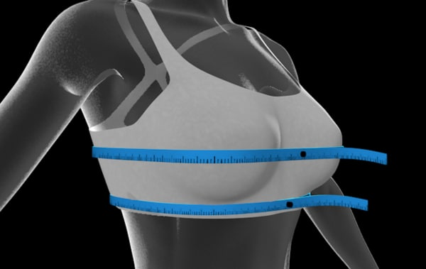 bra size woman 3d model