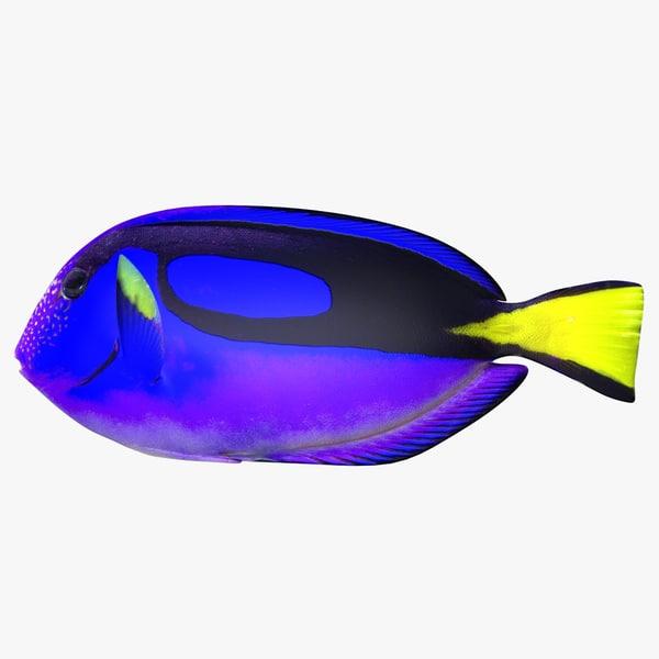 3d model blue tang scanline