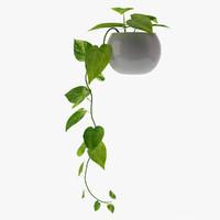 3d model money plant