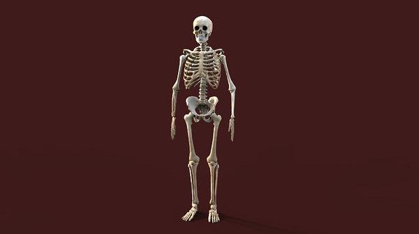 3d human skeleton model