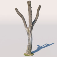 Tree 08 (3D scan)