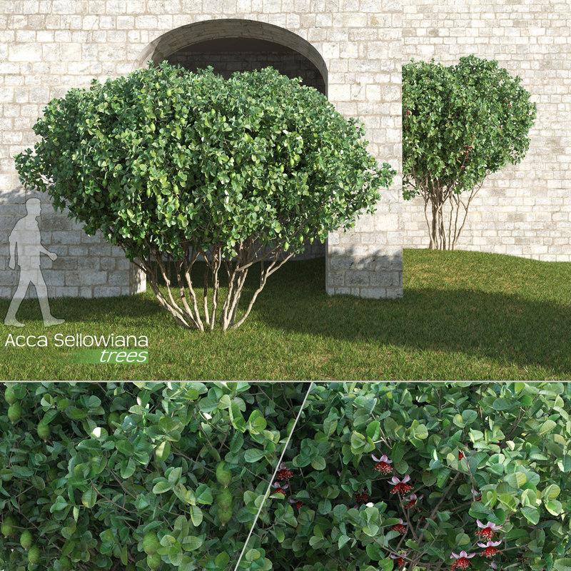acca sellowiana trees feijoa 3d model