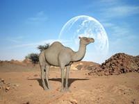 3d camel model